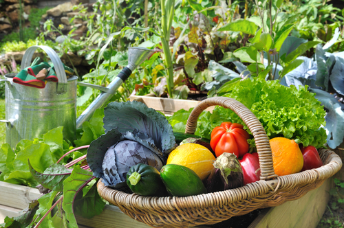 How Healthy Is It To Grow Your Own Organic Vegetables