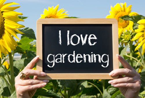 Getting Started in Container Gardening