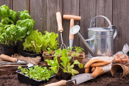Basic Guides Of Vegetable Garden Planting